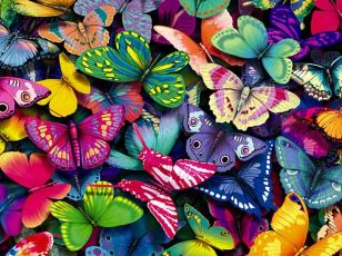 butterfly-this-free-best-website_171277
